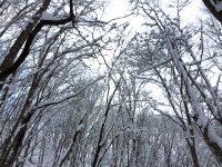 """2017/02/19 北海道 マウントレースイ """"え!?まさかの!?"""""""
