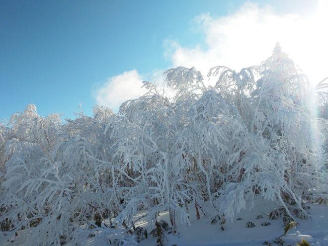 寺子屋の山頂の樹氷